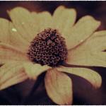 flower(c)alena_romanenko